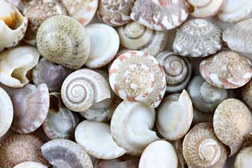 macro of sea shells.