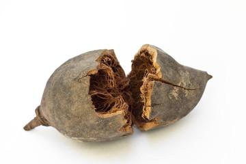 Fotorolgordijn Baobab Frutto del baobab (Adansonia digitata)