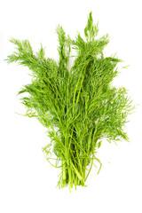 bunch fresh dill herb