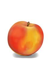 Simple, realistic orange peach illustration, front view.