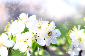 Background with blossom