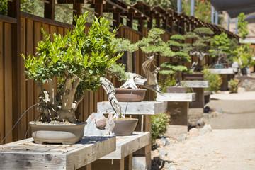 Variety of Bonsai Trees on Display