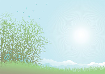 Green grass, bare trees and birds on spring  landscape