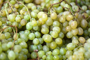 Background of freshly white grapes