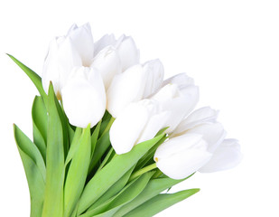 Beautiful bouquet of white tulips isolated on white