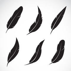 Vector group of feather