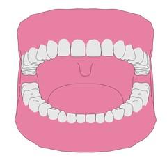 cartoon image of human teeth
