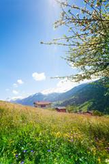 Wall Mural - Flowers field near Swiss mountains