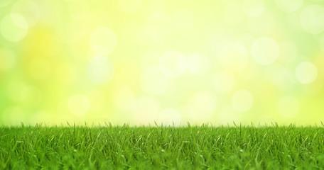 Frühlingshafter Hintergrund mit Gras