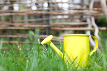 yellow watering can with water in the green grass