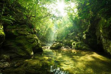 Foto auf Acrylglas Fluss やんばるの清流(奥間川)