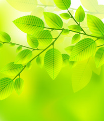 Leaves tree - blurred green vector illustration