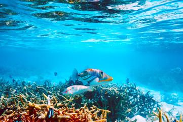 Foto op Aluminium Onder water Coral reef at Maldives