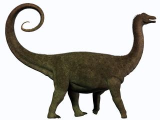 Saltasaurus Profile