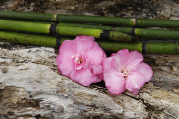 bamboo grove with two pink flower on Old Board texture
