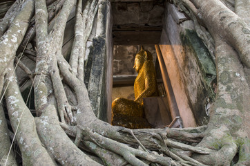 Root of the tree absorbing the ruins Wat Bang Kung Within the temple,Temple in Thailand