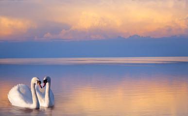 Foto op Plexiglas Zwaan art beautiful Two white swans on a lake