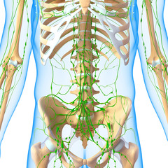 3d Anatomy of  lymphatic system