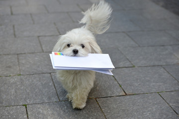 Hund trägt Briefe