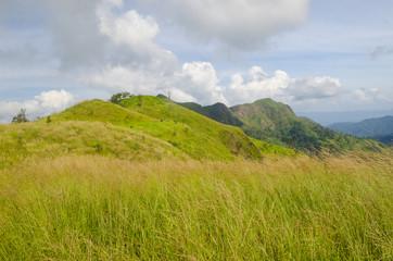 Yellow grassland on mountains in autumn