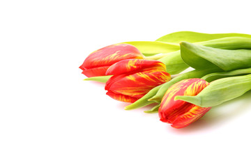 3 rote Tulpen