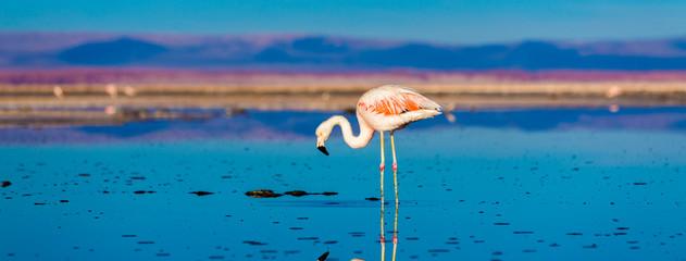 Atacama Desert in Chile, South America