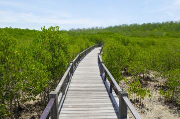 The forest mangrove at Petchaburi, Thailand.