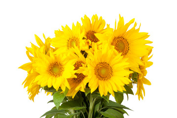 Bouquet of blossoming sunflowers on a white background