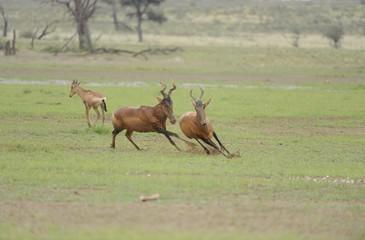 blonde-antelope-video-safe-days-for-having-sex