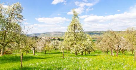 Wall Mural - Obstbäume im Frühjahr
