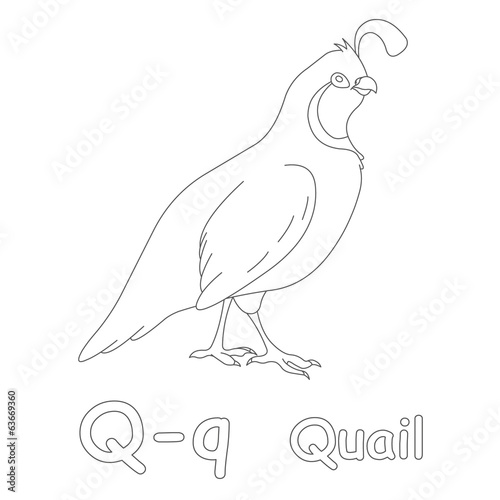 Q For Quail Coloring Page Stock Photo And Royalty Free Images On