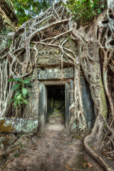 Fototapete - Ancient stone door and tree roots, Ta Prohm temple, Angkor, Camb