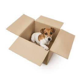 Little dog inside a cardboard box