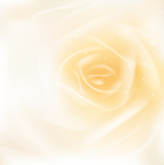 rose or beauty concept smooth background, vector illustration