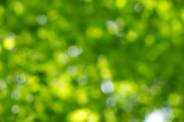 spring bokeh background