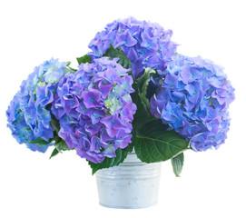 posy of blue hortensia flowers