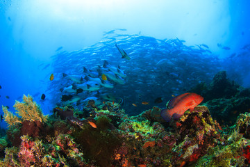Coral Reef and School Bigeye Trevally fish