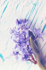 flower scilla on the board,vintage