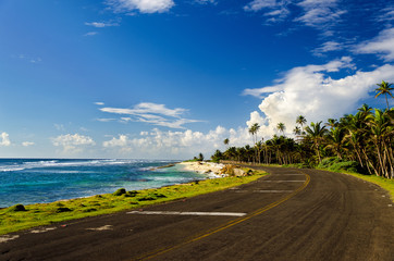 Coastal Road and Palm Trees