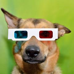 Dog 3D