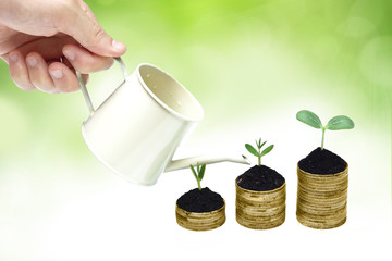 hand watering trees growing on coins / csr