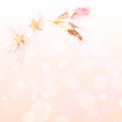 Pink background with a blossoming branch