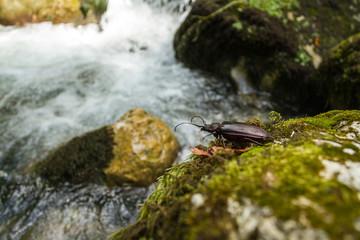 Käfer im Kaukasus
