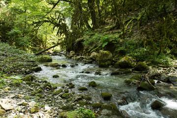 Urwald im Kaukasus