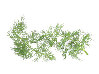 Several branch of dill.