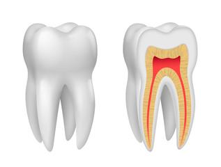 Dents vectorielles 2