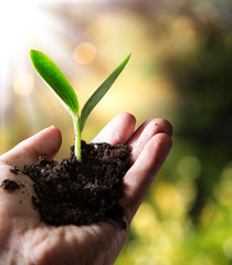 exclusive - agriculture concept , small plant in hand