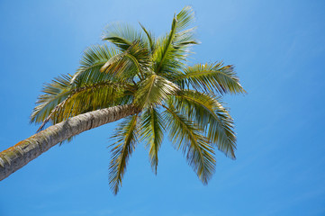 Under a coconut tree with blue sky in background