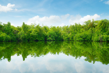Mangroves and blue sky
