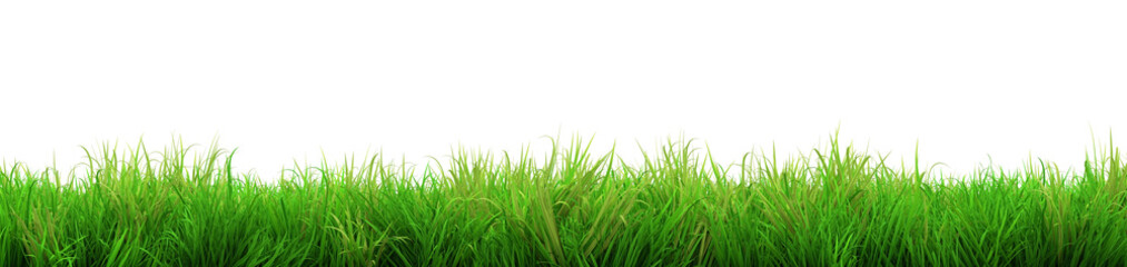 gorgeous green grass summer isolated on white background